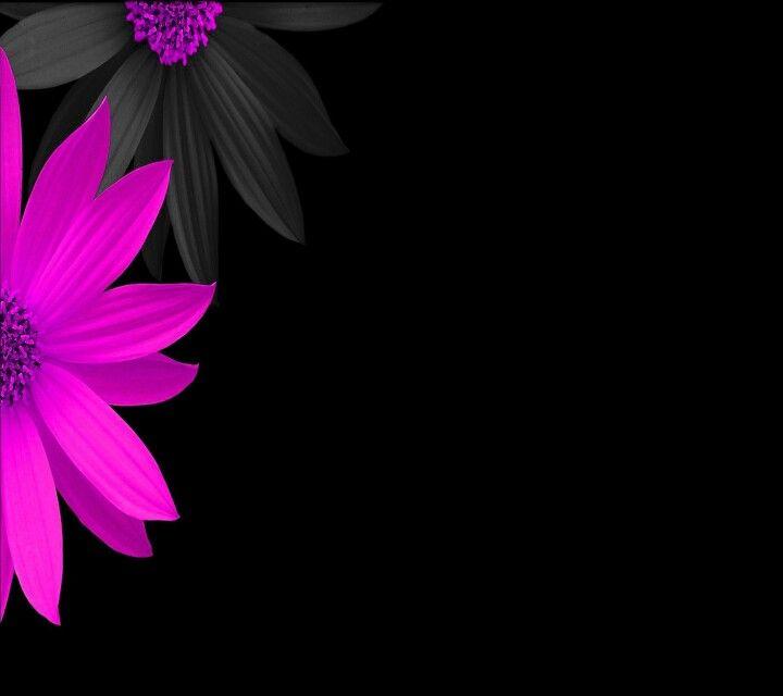 Pink Black Flowers