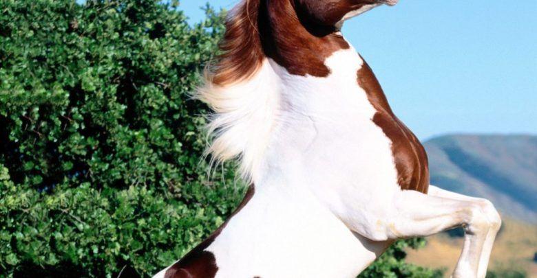 معلومات عن الحصان غريبة وممتعة لا يعرفها الكثيرون Horses Animals