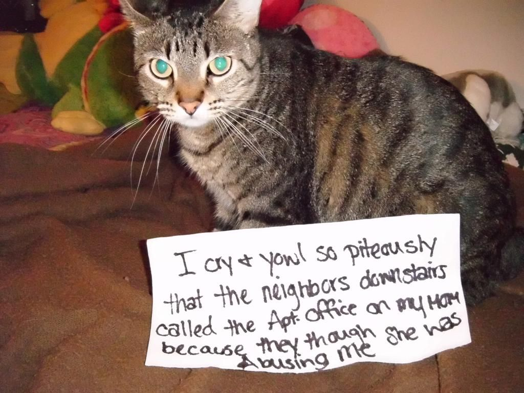 Cat Shaming cat shaming Whiner Feline Frenzy