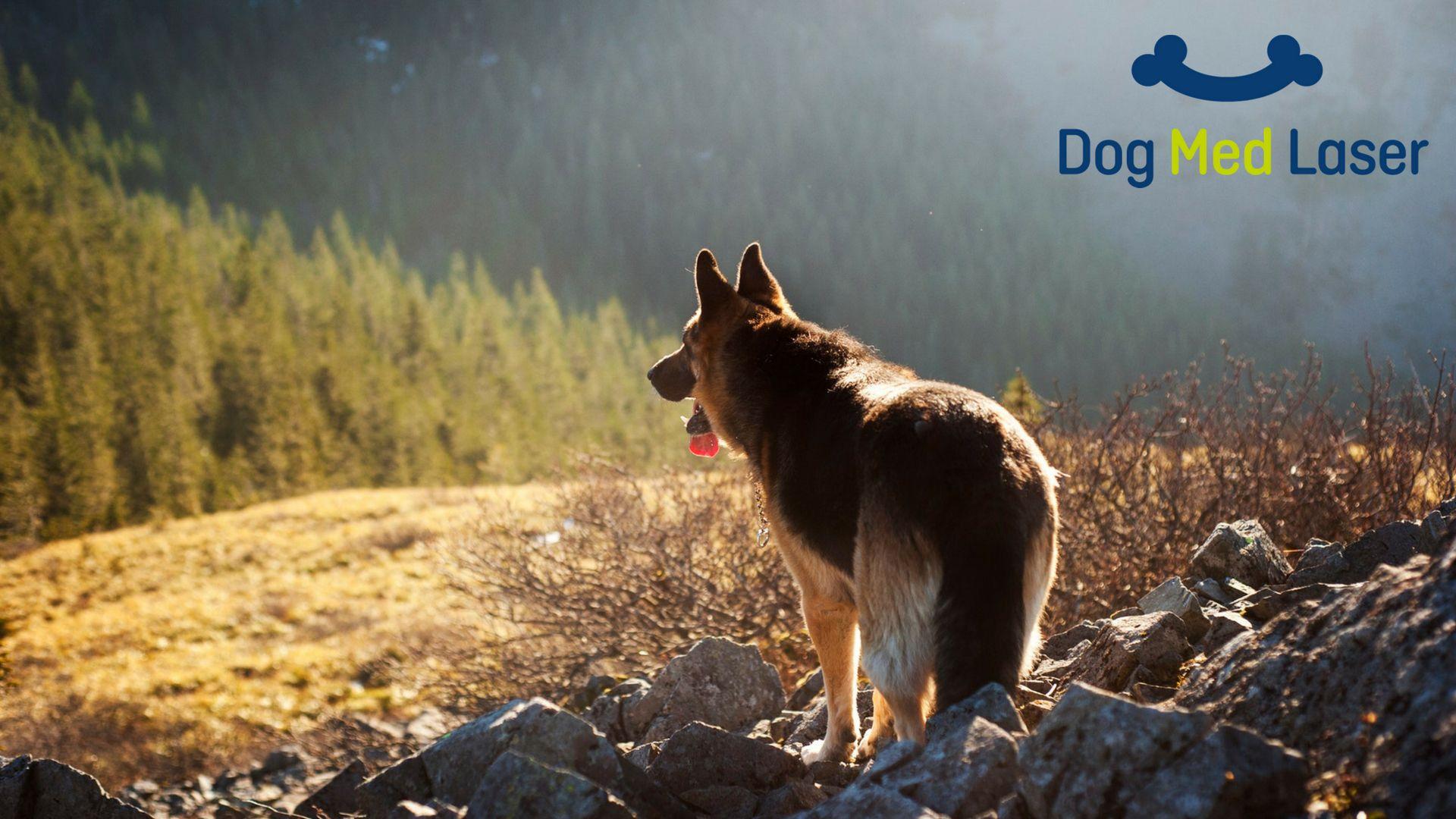 Home Giant Dog Breeds Meds For Dogs Giant Dogs