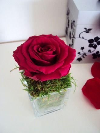 petit vase cube rose ternelle bordeaux mousse naturelle. Black Bedroom Furniture Sets. Home Design Ideas