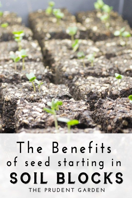 The Benefits Of Seed Starting In Soil Blocks Alternative Places And Benefits Of
