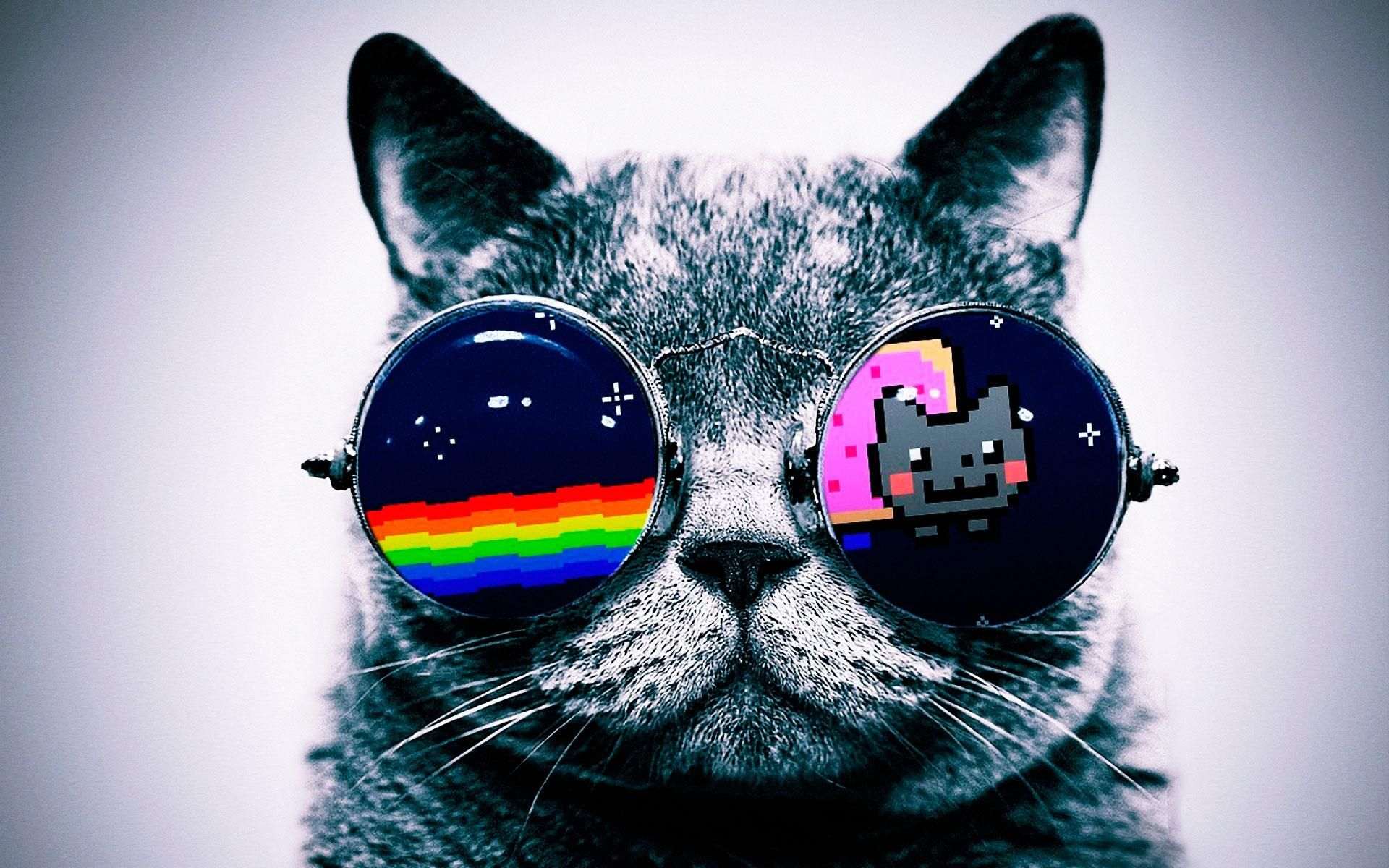 Pin By Alex Hailey On Backgrounds Wallpapers Nyan Cat Cat Background Hipster Cat
