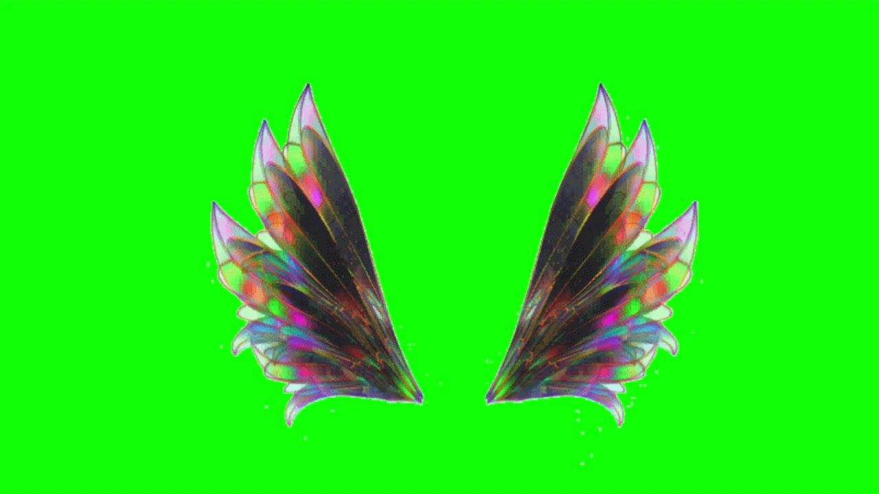 Free Green Screen Video Feather Wings Collection Greenscreen