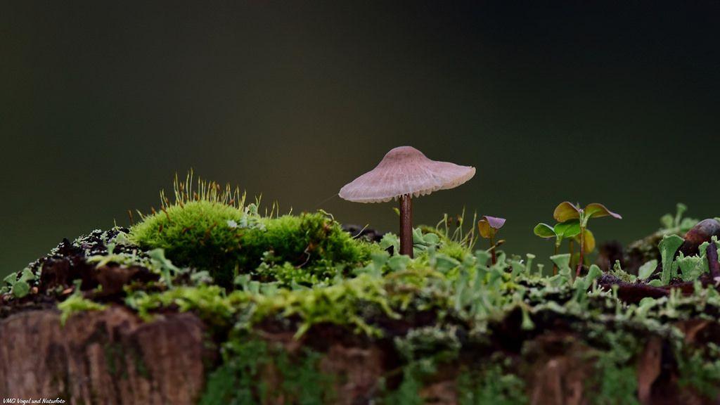 Kleine Welt / little World by VMG Vogel und Naturfoto.