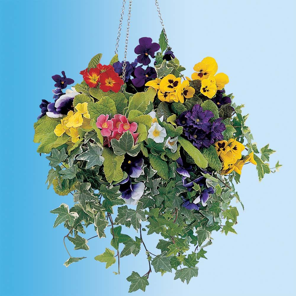 Hanging Basket Collection Winter