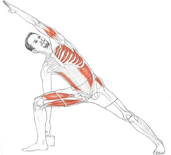 Anatomy of the yoga pose Setu Bandhasana. Description from pinterest ...