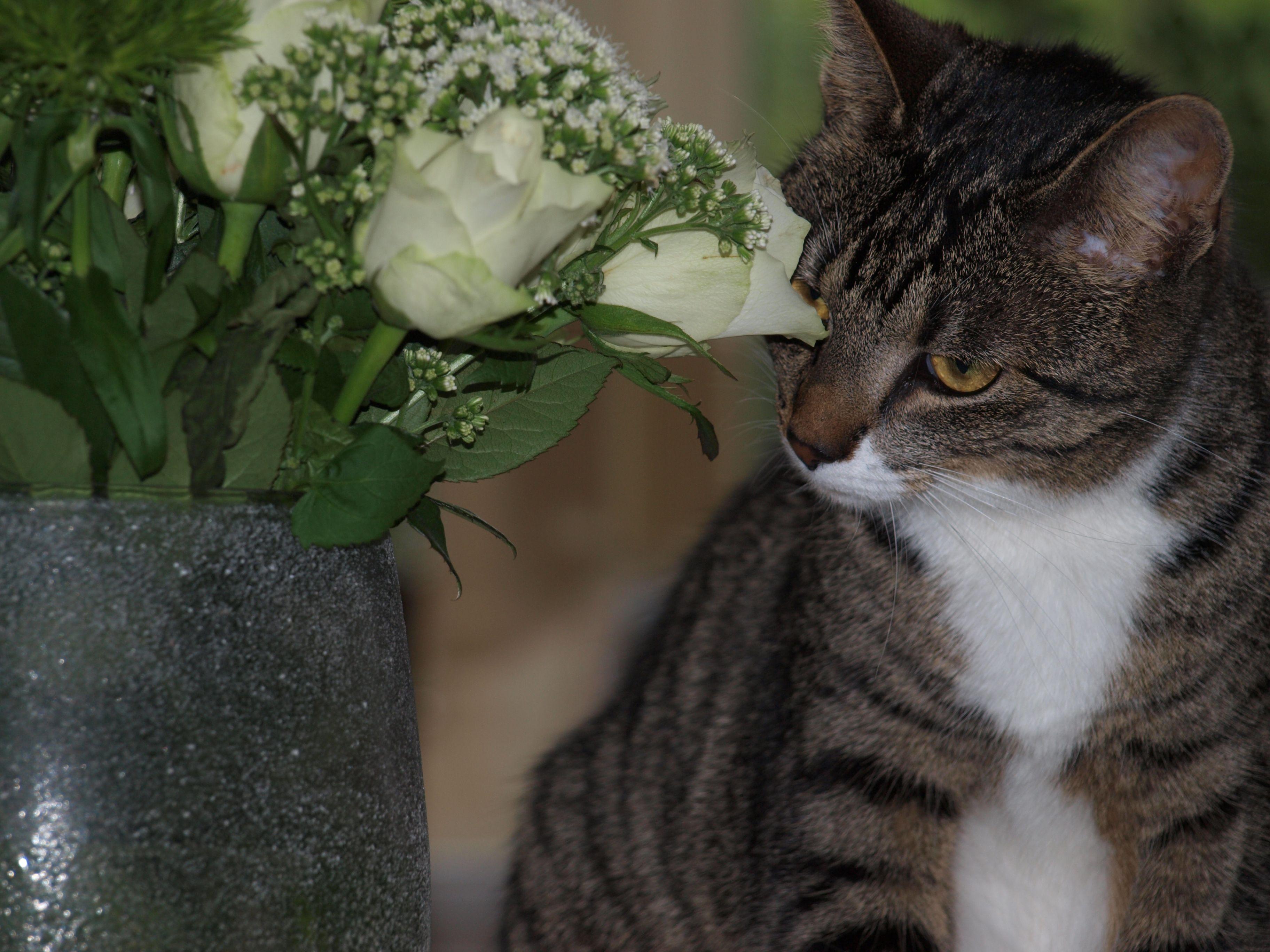ze houd van bloemen