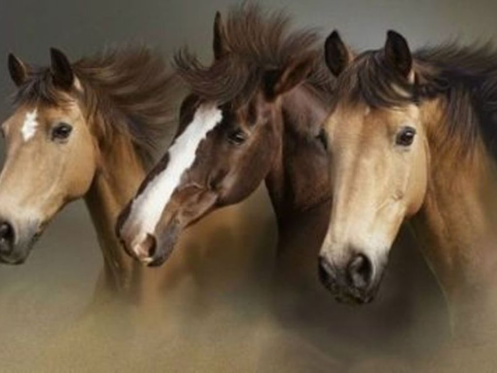 Download Beautiful Wild Horses Wallpaper 1024x768 Full