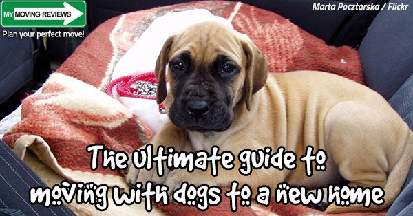 How Moving Affects Dogs The Ultimate Guide To Moving With Dogs To A New Home Learn How To Keep Your Dog Calm Stress Dog Stress Dog Friendly Vacation Dogs
