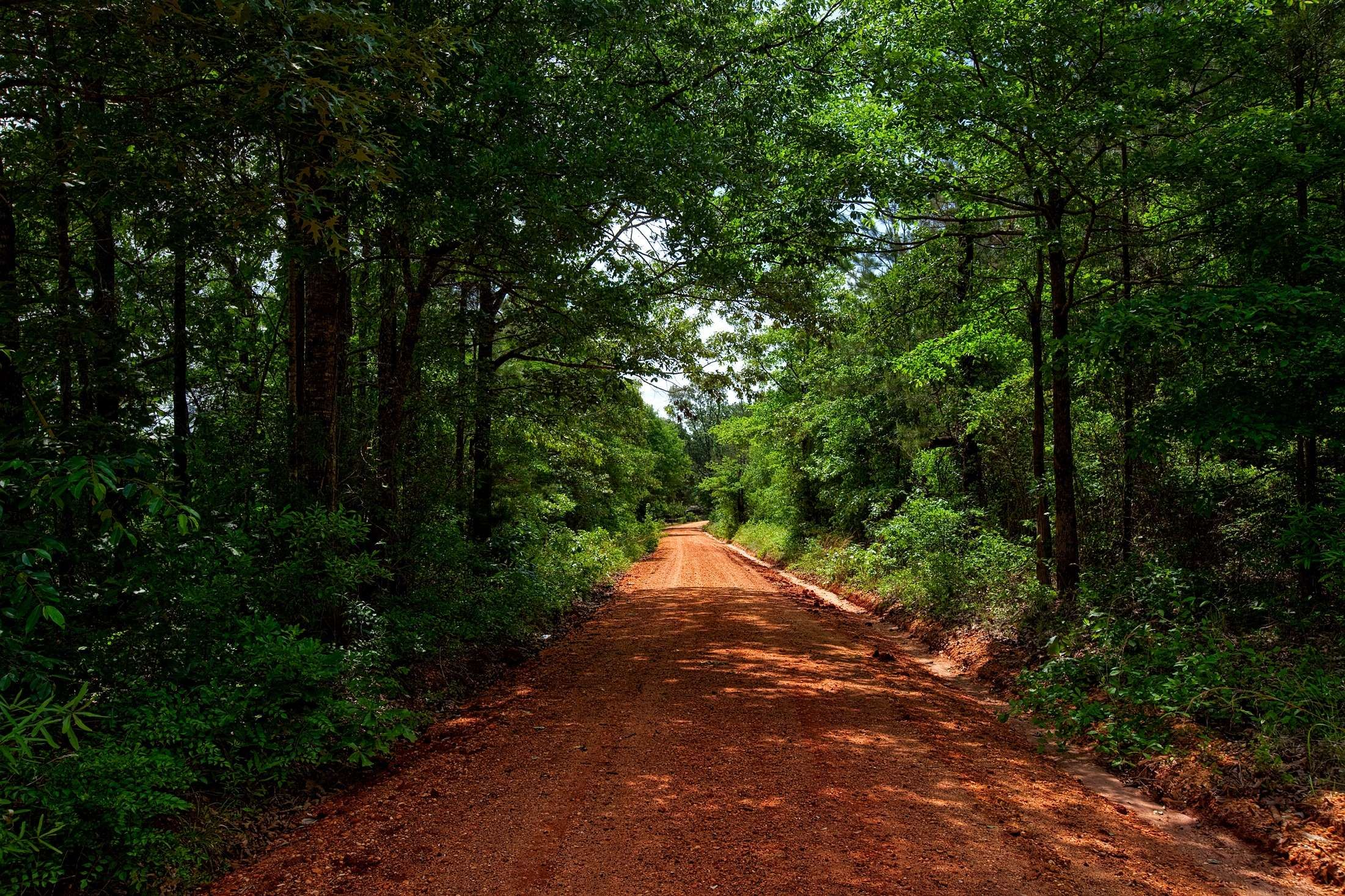 Alabama Beautiful Countryside Dense Dirt Road Forest Hdr