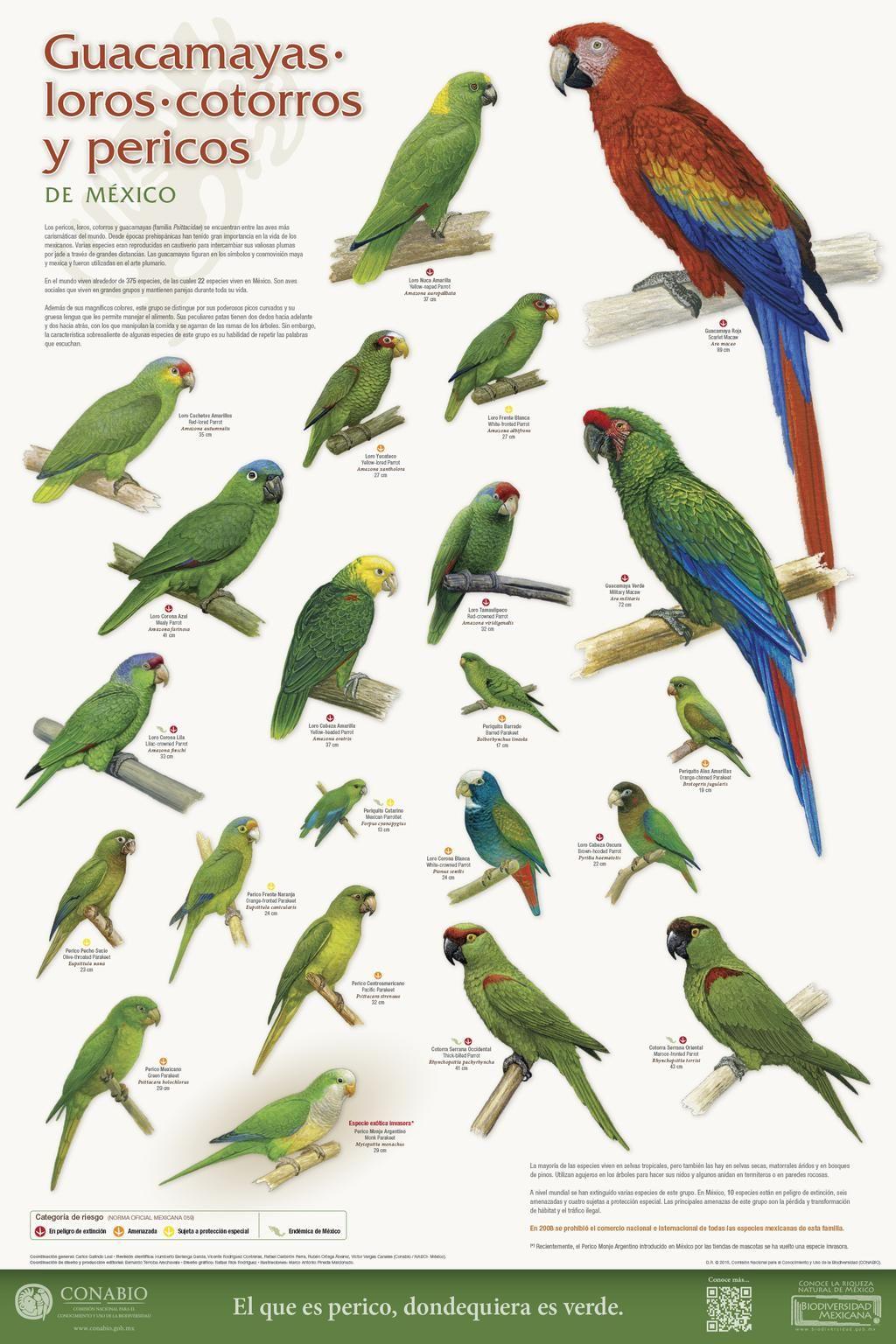 Conabio On Twitter Beautiful Birds Bird Types Cute Birds