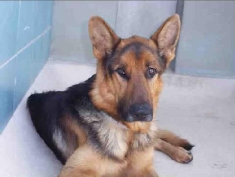 This Is Jameson He Is In Hillsborough County Animal Services