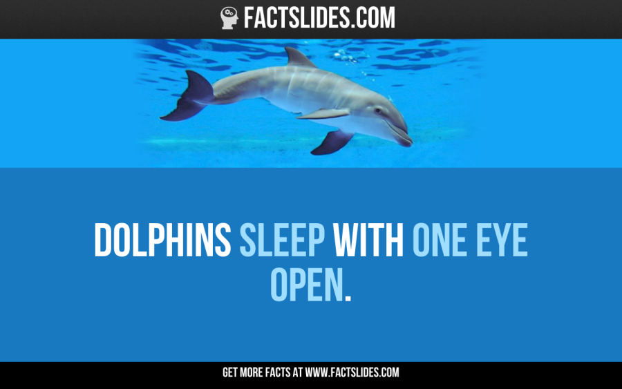 Dolphins Sleep With One Eye Open Animal Facts Dolphin Facts Animals