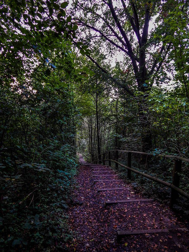 Wandern und Bushcraften im Teutoburger Wald. - Der Hermannsweg  www.treat-of-freedom.de  Abenteuer * Individualreisen * Bushcraft * Outdoor * Natur