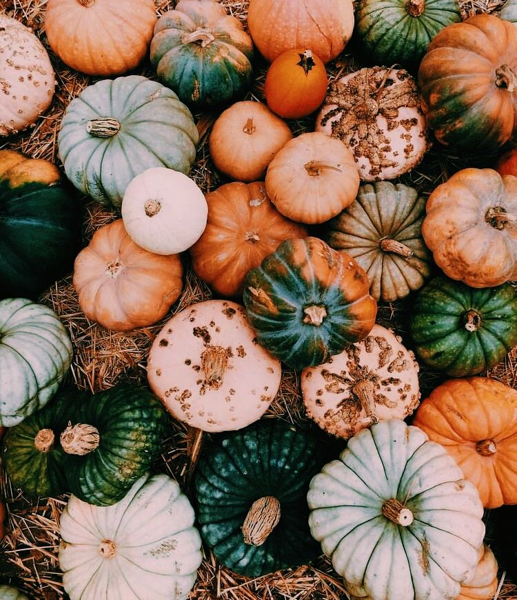 Pinterest carolinefaith417★ Hello autumn, Fall