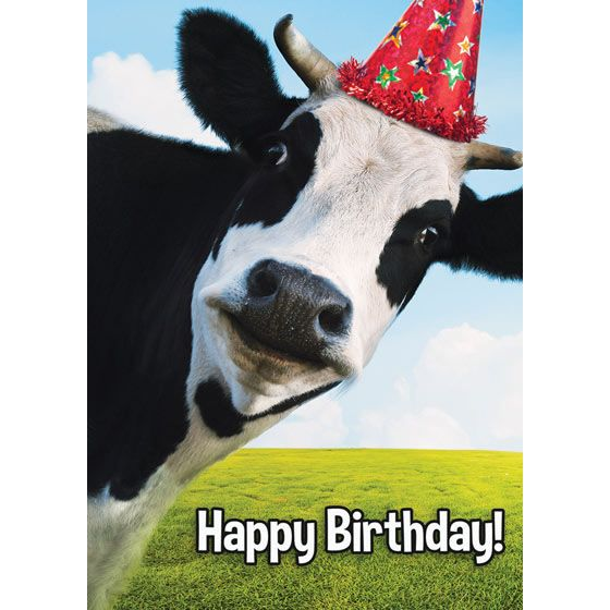Cow birthday cards choice image birthday cake decoration ideas cow birthday card choice image birthday cake decoration ideas cow birthday card images birthday cake decoration bookmarktalkfo Images