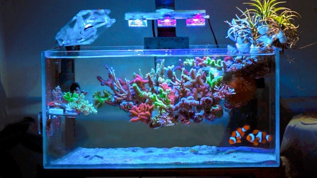 This Coral Reef is ~ Floating ~ - YouTube   Reef tank ...