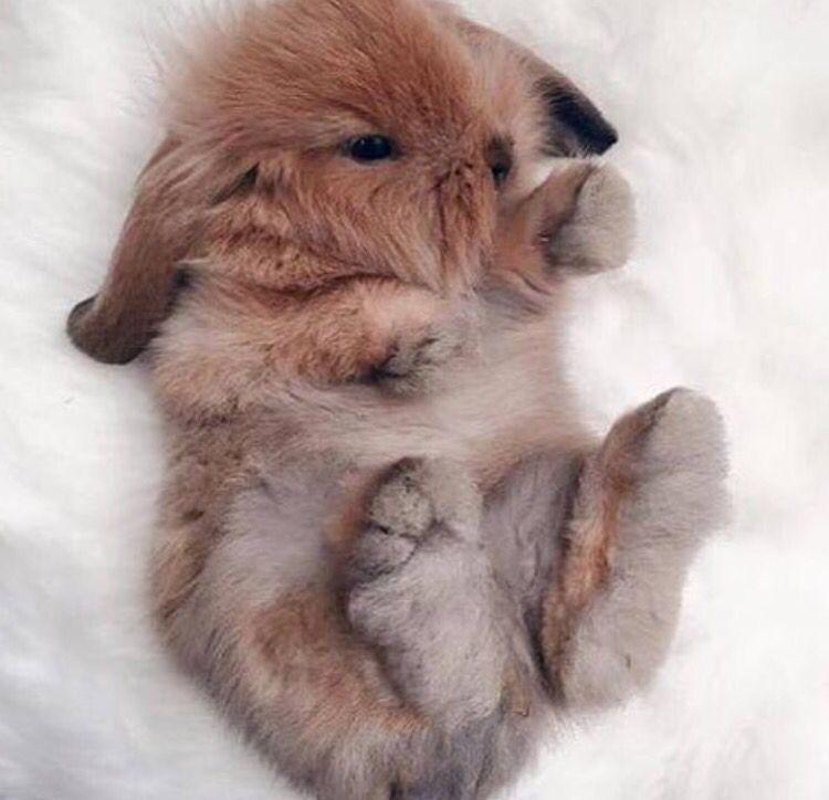 ☼ριитєяєѕт Imapenguin☼ ↠『αмαуα』↞ Cute baby animals