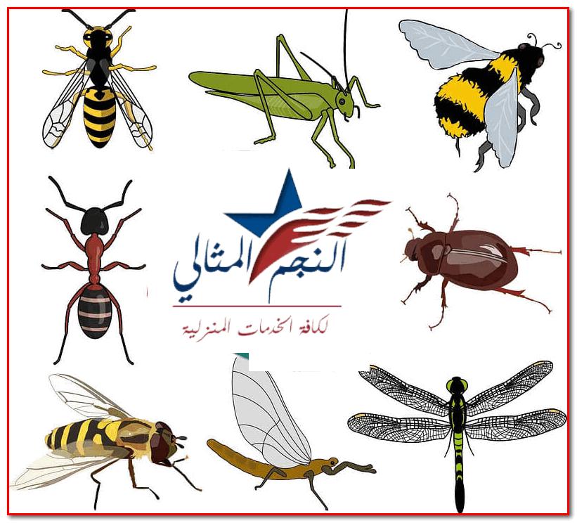 أصبحت شركة مكافحة حشرات بالجبيل هي الأبرز في عالم مكافحة الحشرات بعد أن ذاع صيتها وتوصلت إلى أحدث طرق مكافحة جميع أنواع الحشرات Insect Control Insects Rooster