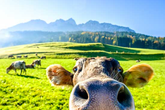 80 Fun Facts About Farm Animals - Capper's Farmer | Practical Advice for the Homemade Life