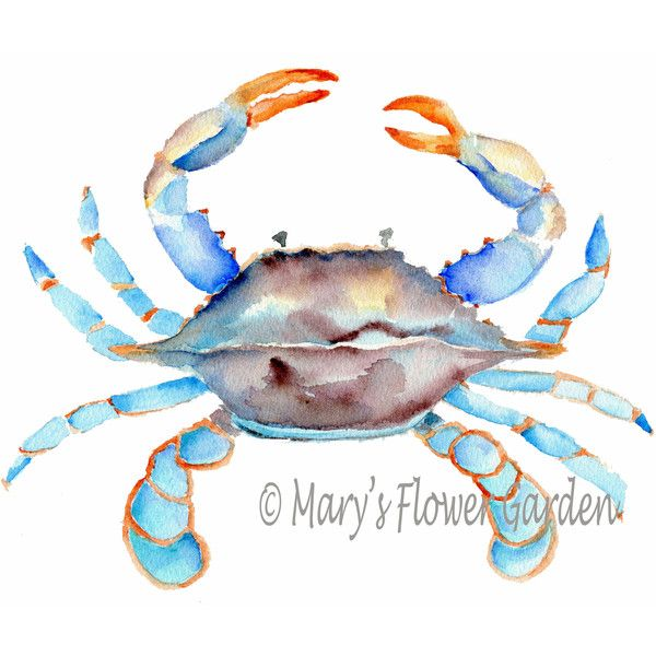 Blue Crab Watercolor-Crab Art Sea Life Art Beach House Decor Crab... (56 DKK) ❤ liked on Polyvore featuring home, home decor, wall art, home & living, home décor, wall décor, white, blue wall art, ink painting and crab painting