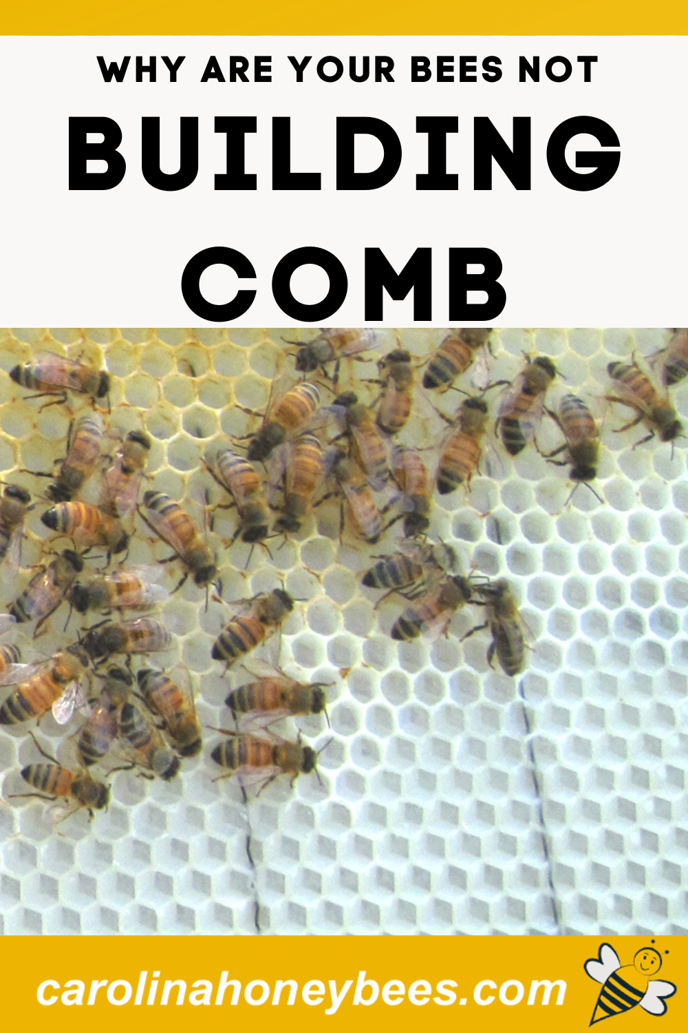 How to get Your Bees to Build Comb- Carolina Honeybees in ...