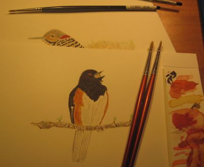 Eastern towhees and Northern flickers as I am working on them for the pages of my new book. I love these two characters.