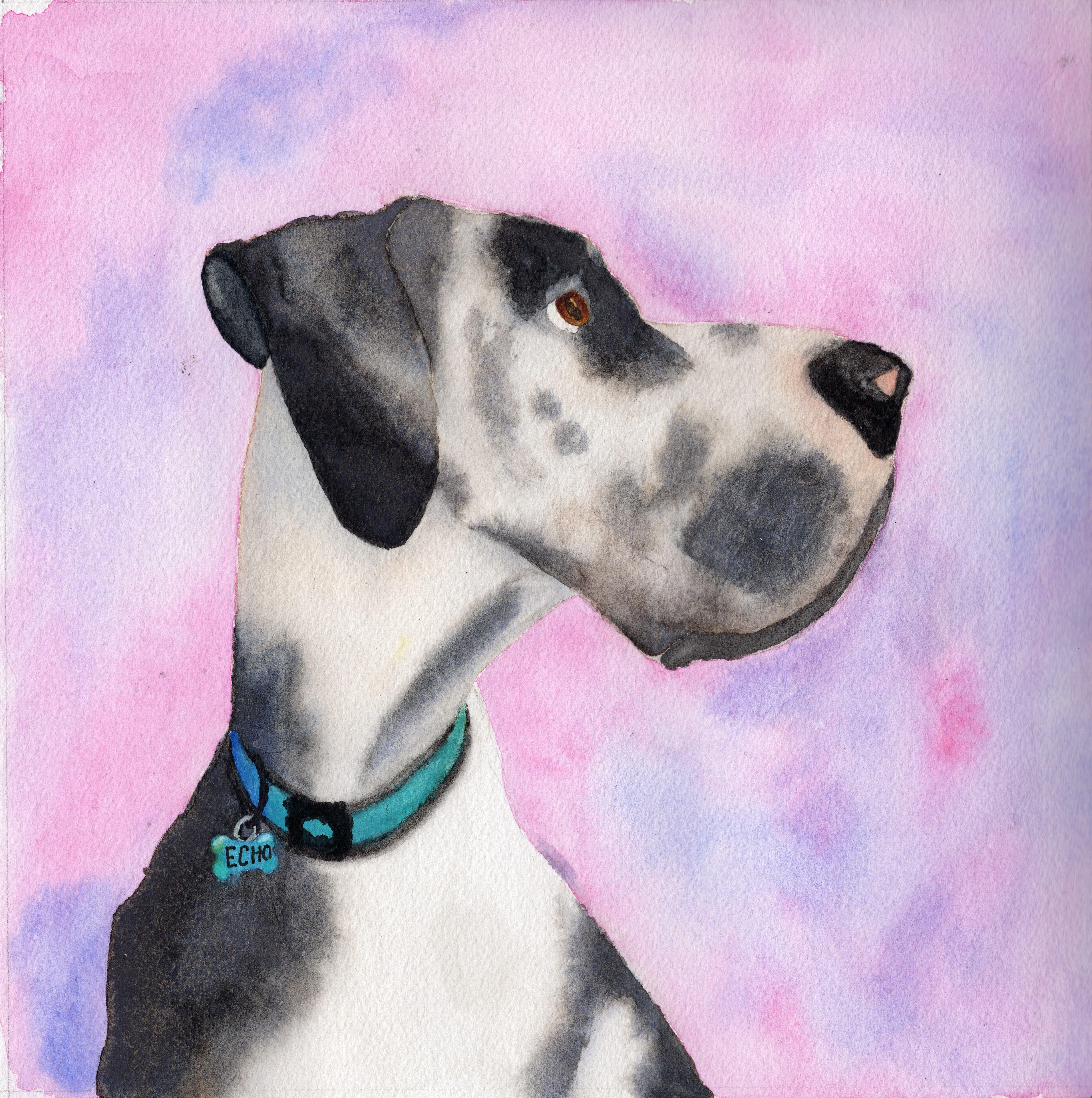 Watercolor Harlequin Great Dane Painting Dog Art Great Dane