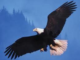 eagle - Google'da Ara