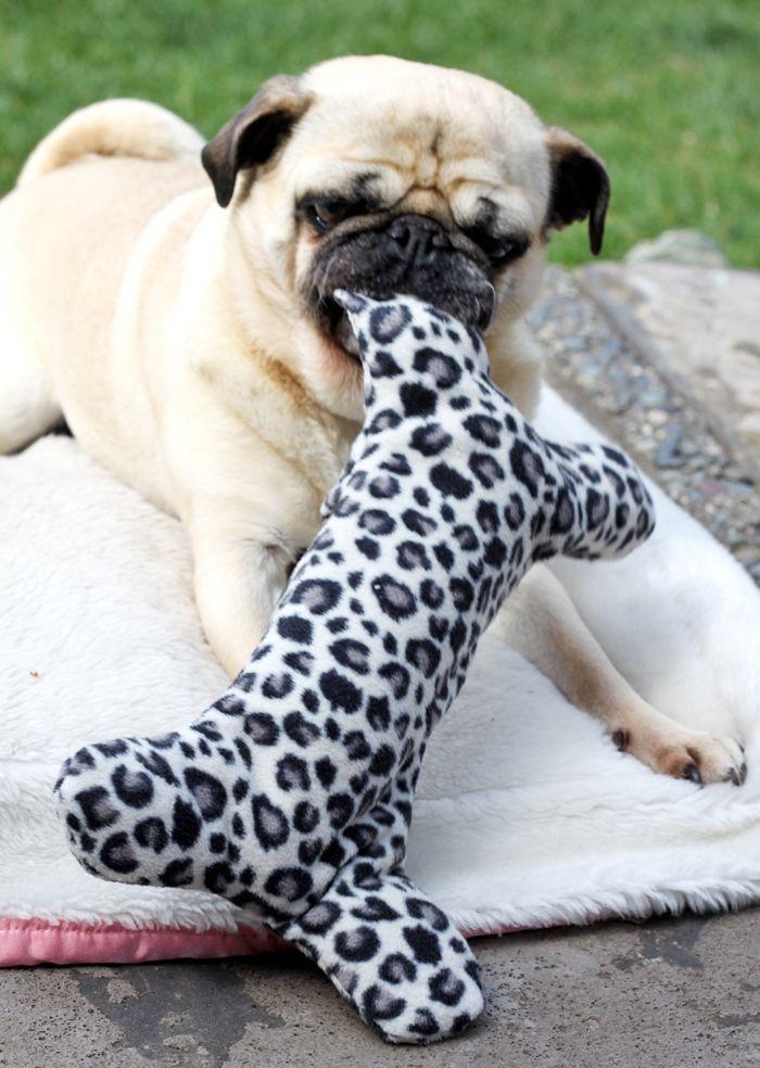 ▷ 1001 + Ideen, wie Sie ein Hundespielzeug selber machen ...