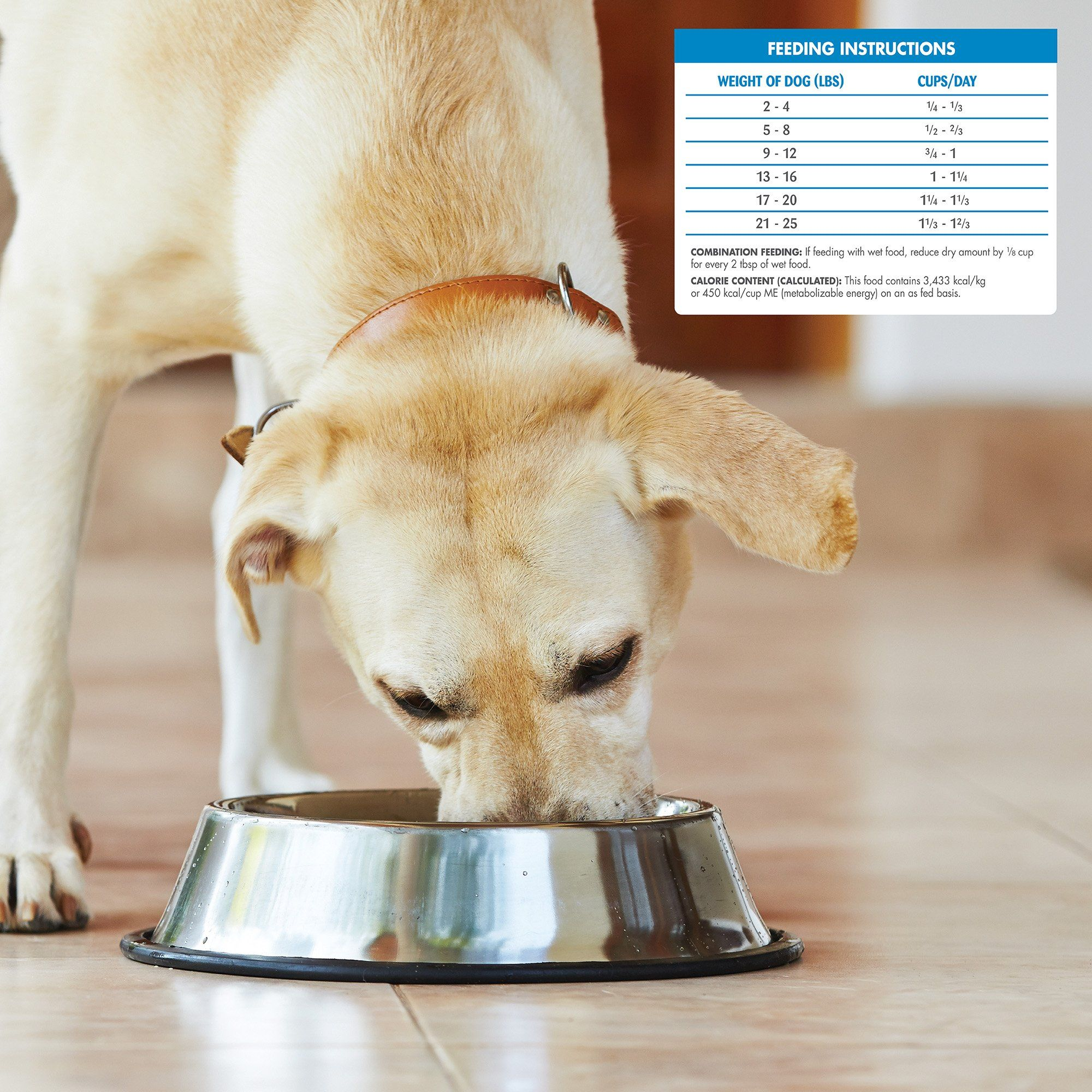 Wellness Simple Natural Grain Free Dry Limited Ingredient Small Breed Dog Food Salmon And Pot Limited Ingredient Dog Food Small Breed Dog Food Dog Food Recipes