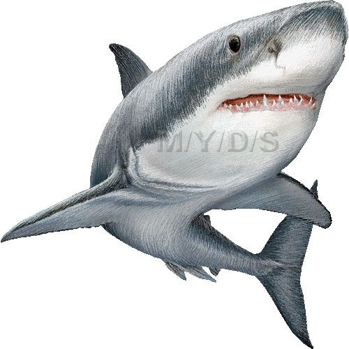 great white sharks clipart picture large ink pinterest shark rh pinterest com Shark Clip Art great white shark clipart free
