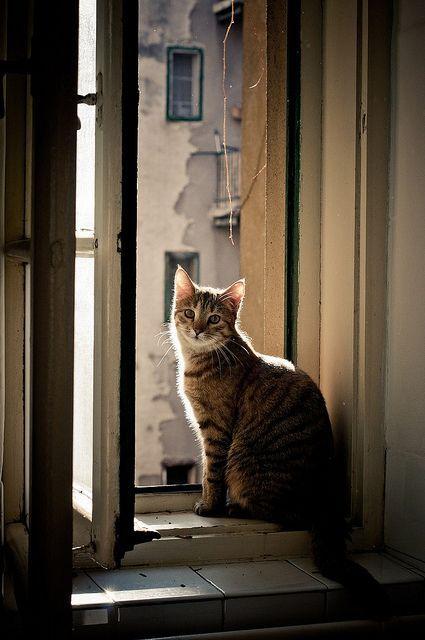 Un gato en la ventana ...