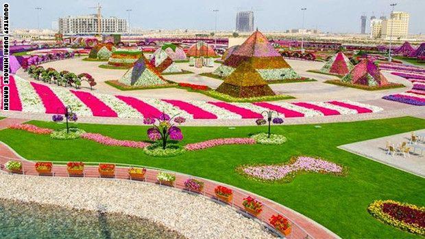 هل تعلم ان حديقة الزهور فى دبي تحتوي على حوالى 45 مليون زهرة مختلفة دبي أنا أحب دبي أنا أحب الامارات الامارات السعودي Miracle Garden Dubai Garden Dubai