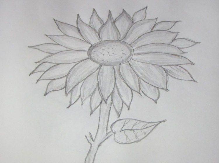 Cara Menggambar Bunga Matahari Lukisan Bunga Matahari Cara Menggambar Lukisan Bunga