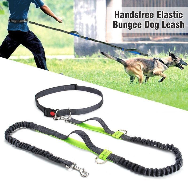 Handsfree Elastic Bungee Dog Leash Dog Leash Dog Training Dogs