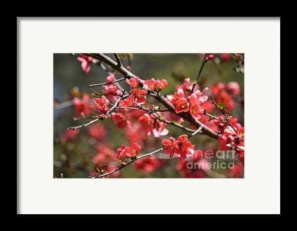 Framing suggestion for Blossoms 8 Framed Print By Fiona Craig at www.fionacraig.com