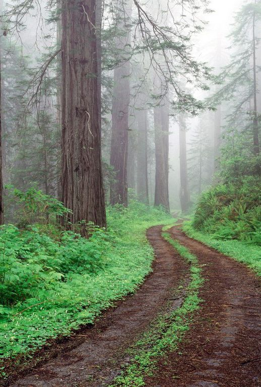 This should be an awesome morning run trail.