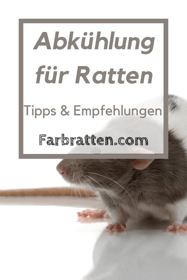 Abkuhlung Fur Farbratten Was Du Gegen Hitze Machen Kannst In 2020 Farbratten Ratten Susse Ratten