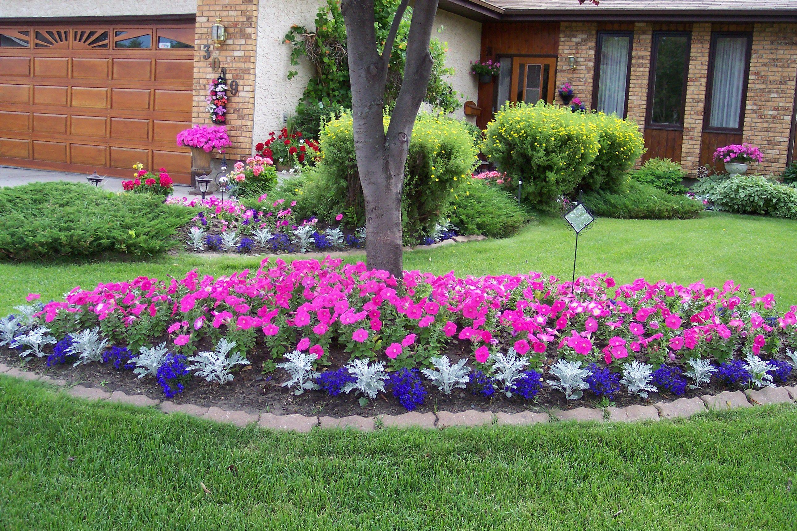Like The Dusty Miller Between Dark Flowers For Border Outdoor Gardens Design Outdoor Garden Planters Front Yard Landscaping