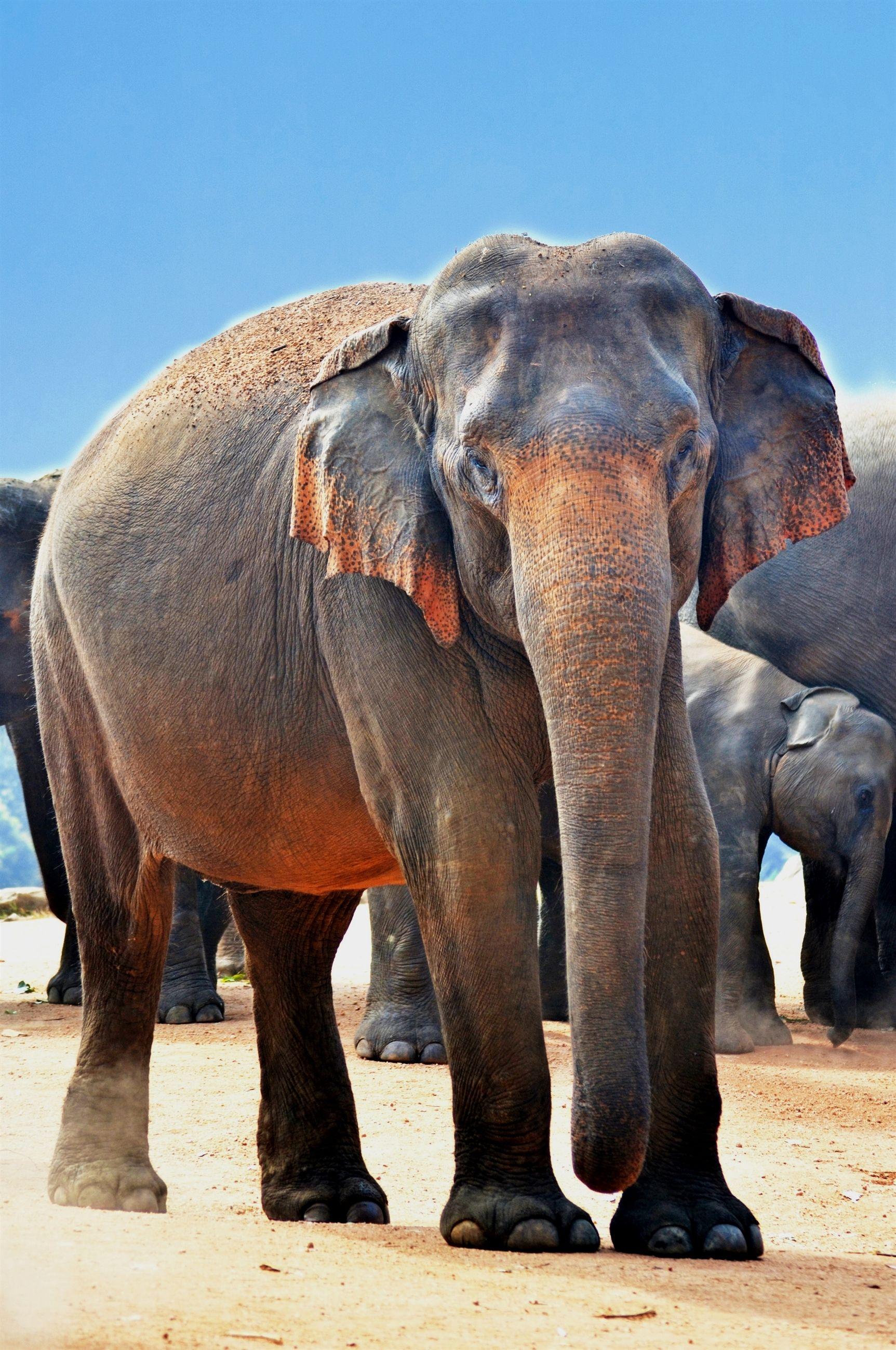 Animals Close Up Elephants Photography Aperture