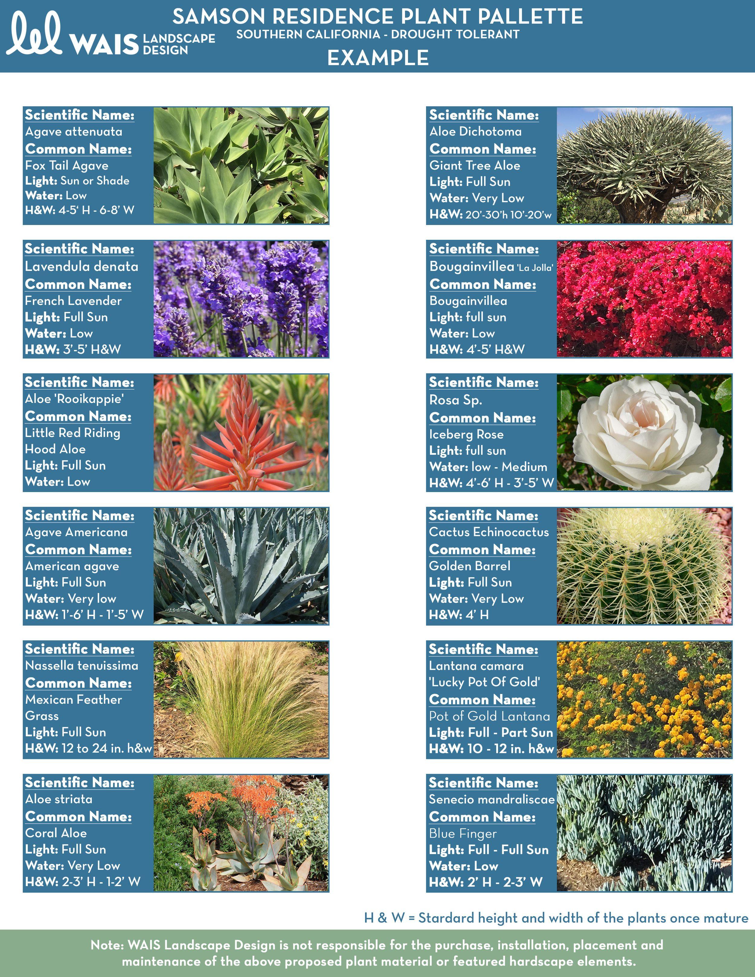 Wais Custom Plant Palette Httpwwwwaisdesignscomdesign