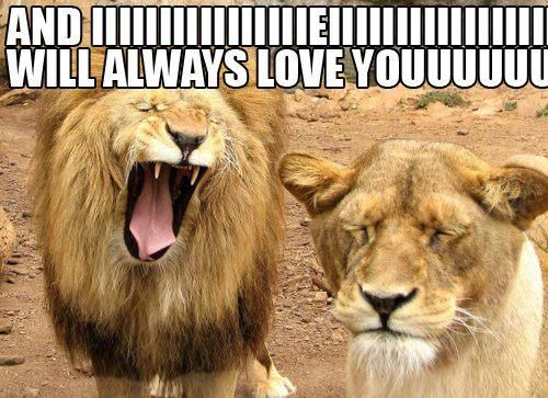 I Will Always Love You Tressa Sanders You Know Where This Is Going Hehe Funny Lion Love You Meme Funny Animals