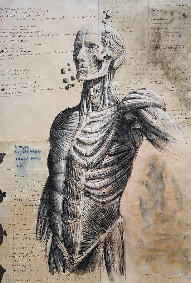 Architektur Mensch | Architektur, Anatomie zeichnung und Anatomie