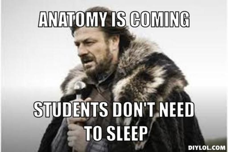 Can T Sleep Funny Meme : Studying for anatomy memes google search ot u c