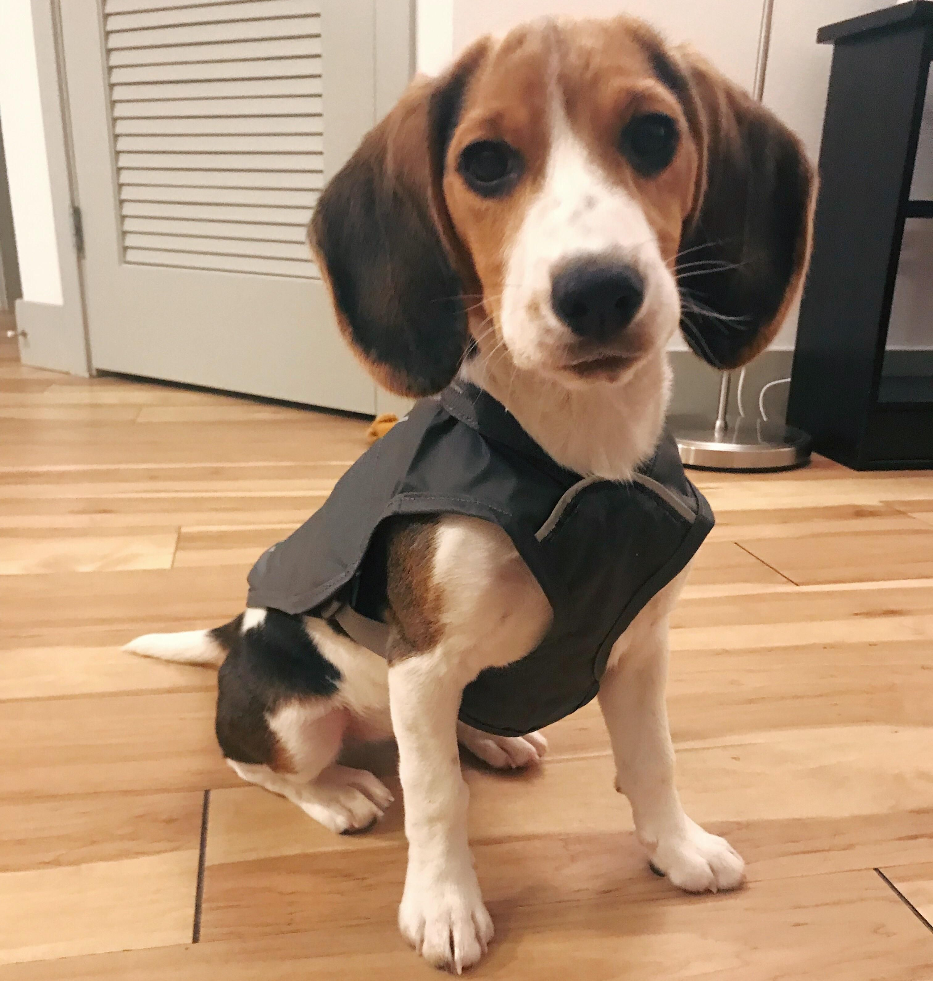 A Rain Jacket Has Been Acquired And Shes Ready For Her First Fall