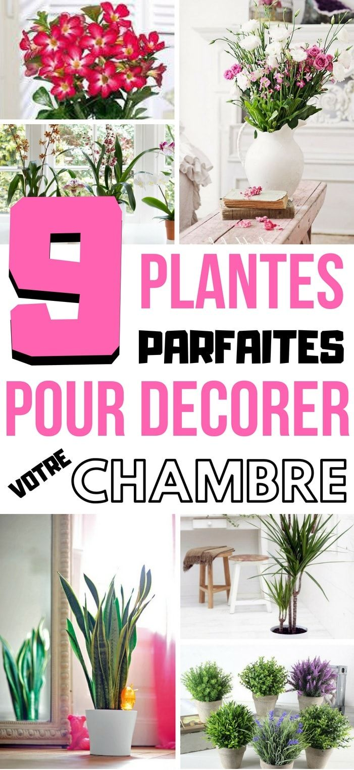 9 plantes parfaites pour votre chambre plante home decor backyard et decor. Black Bedroom Furniture Sets. Home Design Ideas