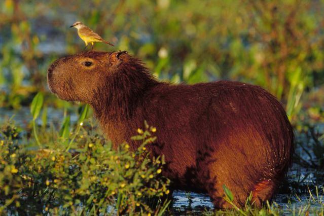 Mammals Birds And Reptiles Of The Amazon Rain Forest Natureza