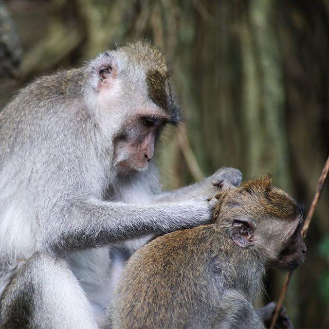 Affen Haben Ein Ausgepragtes Sozialverhalten Und Zeigen Die Volle